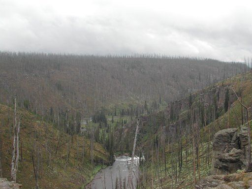 Fire damage in Yellowstone Park, 15 years after the 1988 fire