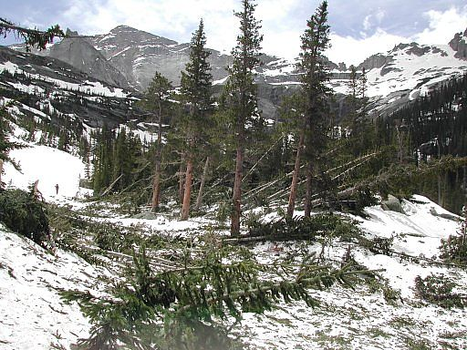 Avalanche damage between Mills and Black Lakes - Glacier Gorge area - Rocky Mountain National Park