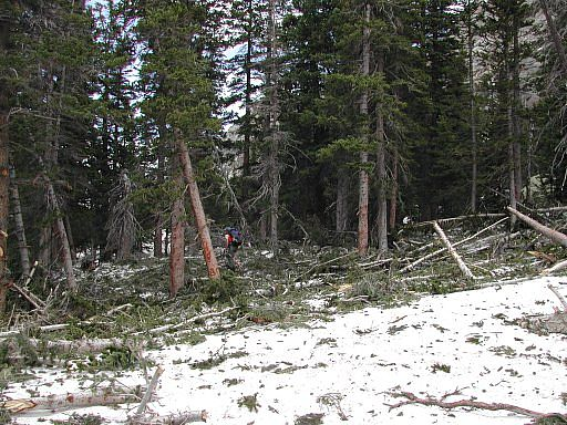 Walking through more avalanche damage between Mills and Black Lakes - Glacier Gorge area - Rocky Mountain National Park