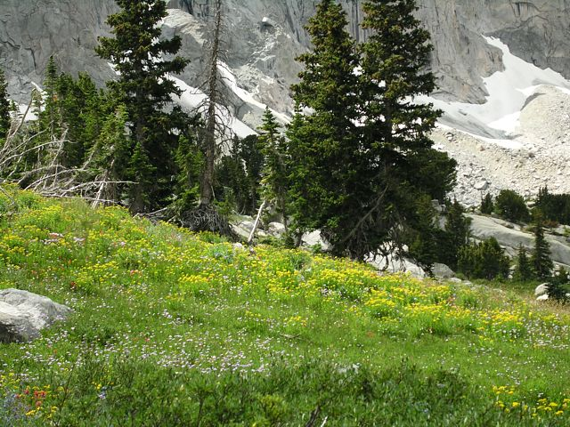 Wildflowers along the lower slopes in the Cirque of the Towers, Wind River Range